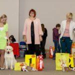 Лабрадор победитель класс щенков