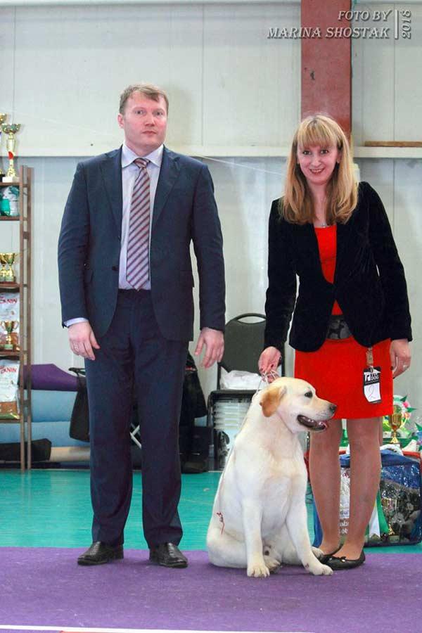 Щеноу лабрадор -лучший щенок
