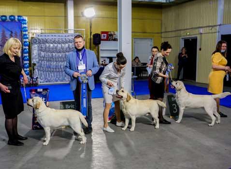 лабрадоры победители выставки